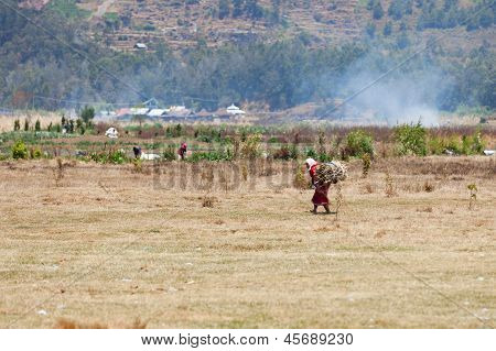 Old Female Farmworker Carries Firewood