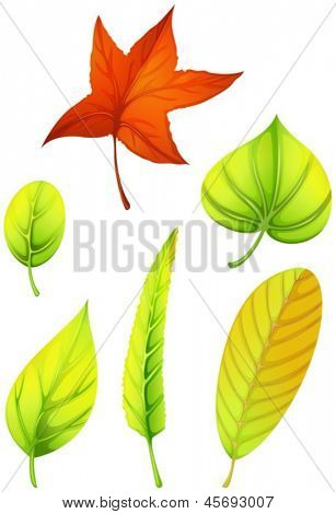 Illustration of the six different leaves on a white background