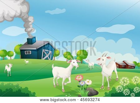 Illustration of a farm with many goats