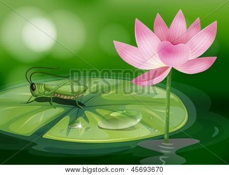 Illustration of a grasshopper above a waterlily beside a pink flower