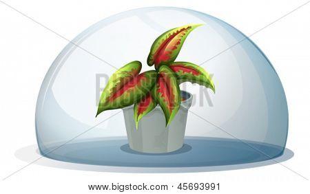 Ilustração de uma cúpula com uma planta dentro de um pote cinza sobre um fundo branco