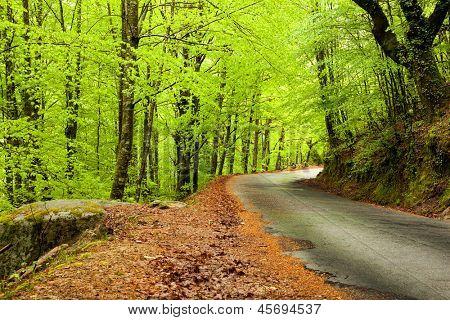 Paisagem de primavera com estrada e belas árvores verdes