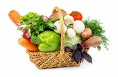 pic of edible mushroom  - Basket of Various Vegetables with Green Bell Pepper Carrots Lettuce Onions Garlic Parsley Potato Tomatoes Cabbage Dill Basil and Edible Mushrooms isolated on white background - JPG