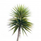 green palm tree branch isolated on white