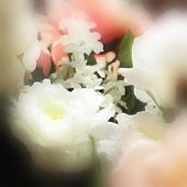 art floral watercolor background with pink and white roses in blur