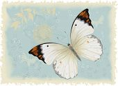Butterfly on a blue retro styled background. All objects are isolated and separated to layers