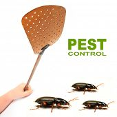 Flyswatter and cockroaches. Ecological pest control. Picture with space for your text.
