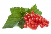 fresh redcurrant isolated