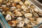 Live clams in glass jar with water, close-up