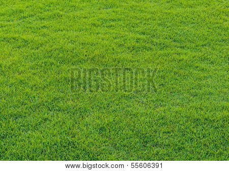 Green Grass Pattern From Golf Course At Sunset Tim