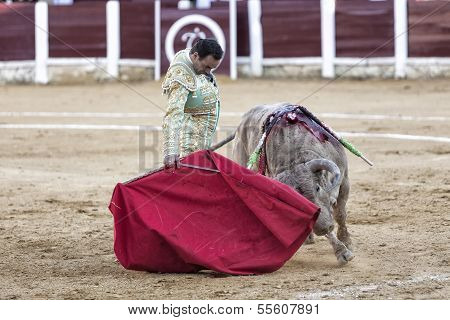 Spanish bullfighter Manuel Jesus with the cape bullfighting a bull of nearly 600 kg of grey ash duri