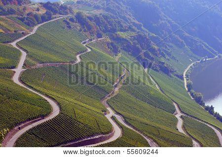 Roads in a vineyard