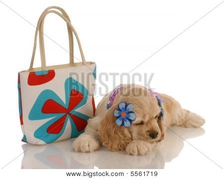 Cocker Spaniel Puppy With Purse