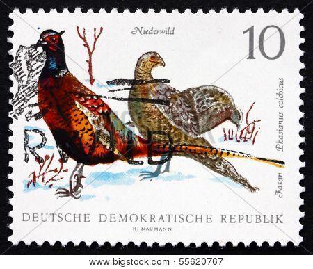 Postage Stamp Gdr 1968 Ring-necked Pheasants, Game Bird