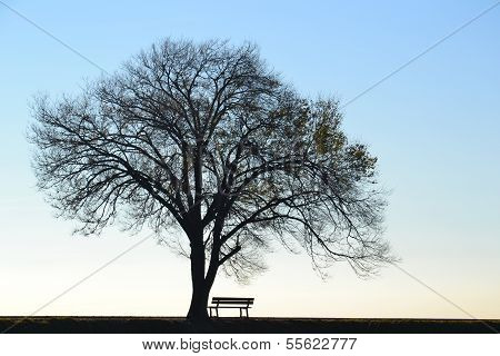 Lonely tree and bench