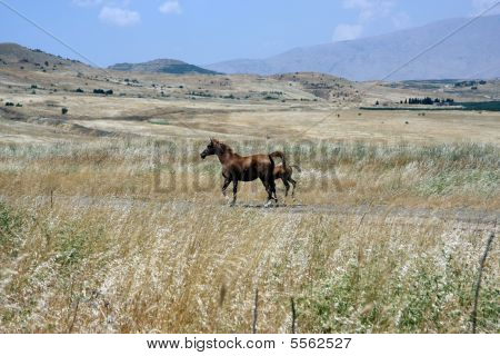 A Pair Of Horses In The Field