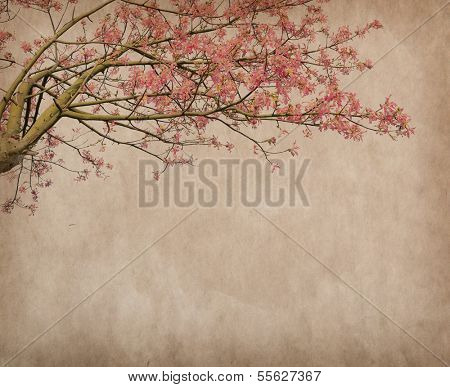 Flowers of the Silk Floss Tree, Chorisia Speciosa,blossom on Old antique vintage paper background