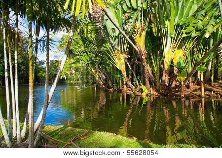 Exotic Trees In The Park In The Summer In Mauritius