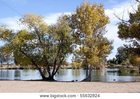 Peaceful park and lake