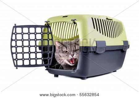 Cat In Carrier Box