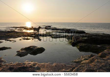 Sunrise at the sea coast