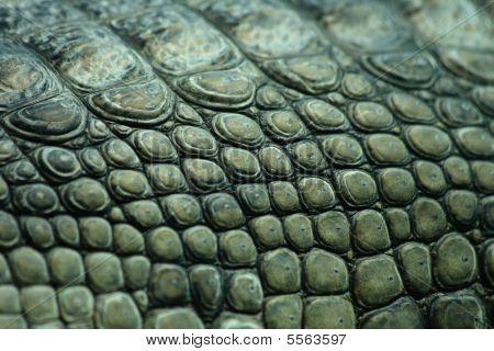 Crocodile Texture