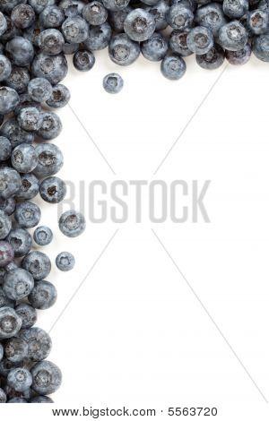Fresh Blueberries Border
