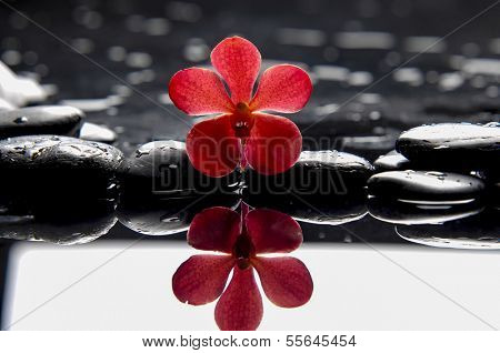 still life with red orchid on wet pebbles with reflection