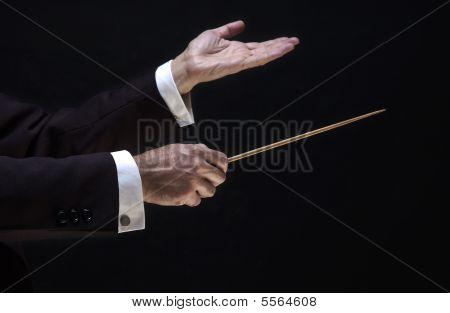Hands Of The Director