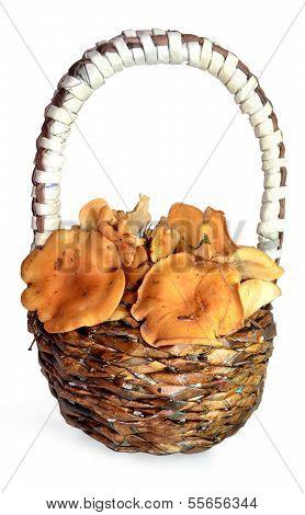 chanterelles in a basket