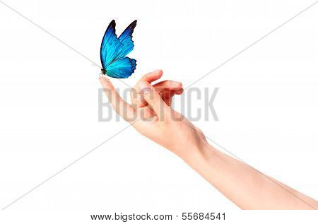 butterfly on woman's hand. In motion