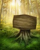 stock photo of surrealism  - Wooden sign in the magic dark forest - JPG