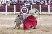 Spanish bullfighter Manuel Jesus El Cid with the cape bullfighting a bull of nearly 600 kg of grey a