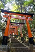 stock photo of inari  - Fushimi Inari - JPG