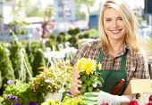 stock photo of greenhouse  - Florists woman working with flowers at a greenhouse - JPG