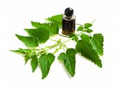 picture of nettle  - Nettle extract and wild nettle isolated on white - JPG