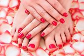 stock photo of pedicure  - female hands with beautiful manicure and pedicure red rose petals - JPG