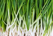 foto of scallion  - Texture background of fresh scallion - JPG