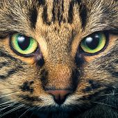 stock photo of tabby-cat  - Close - JPG