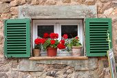 stock photo of geranium  - Flowerpot filled with vivid red geraniums standing on an exterior windowsill of a window with painted green shutters in an old stone wall - JPG
