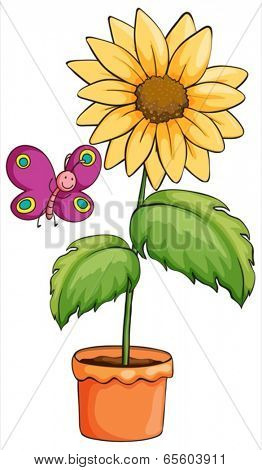 Illustration of a sunflower plant in a pot on a white background