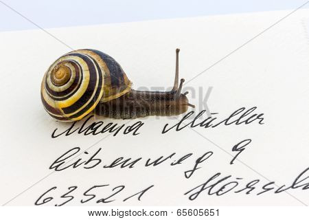 a snail on a letter. symbolic photo for slow breifzustellung. smail