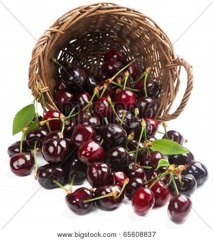 Cherry Berries Scattered From A Wicker Basket