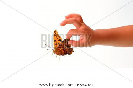 Baby And A Butterfly 1