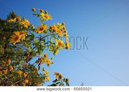 Buathong Flowers