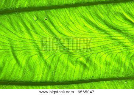Part Of Leaf