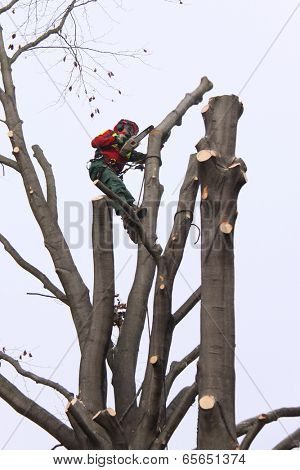 Forester taking down a tree