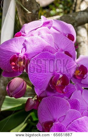 Beautiful Exotic Phalaenopsis Orchids