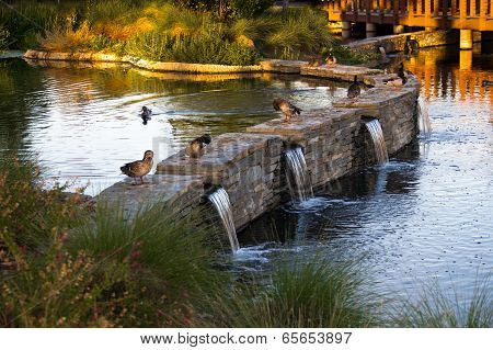 Ducks On A Waterfall Wall