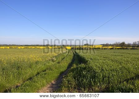 Farmland Footpath In Springtime